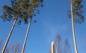 puut-3.jpg